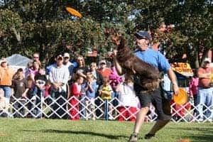 Great American Disc Dogs
