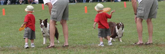 Child throwing sequence to Border Collie.