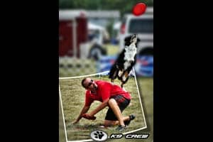 K9 Crew Trick Dog Show